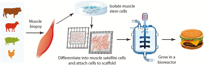 Cell Based Meat