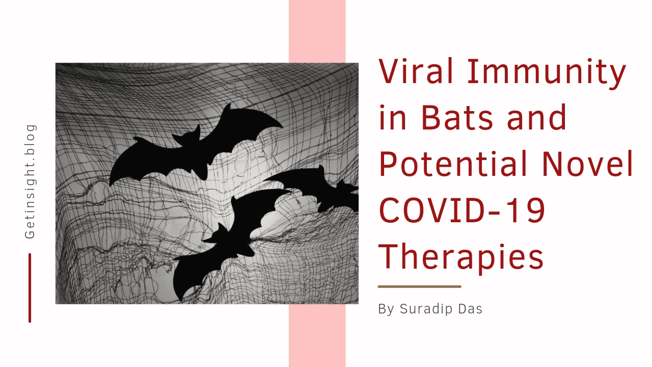 Viral Immunity in Bats and Potential Novel COVID-19 Therapies